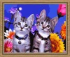 Cat DIY oil painting by numbers for adults (40*50cm)
