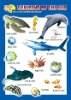 Learning denizens of sea for kids educational wall map