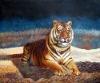 Oil Painting Animal