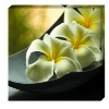 Plumeria rubra gicless canvas painting