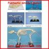 dog skeleton structure model, medical model (DWM0013)
