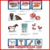 horse skeleton and organ structure model, anatomical model(DWM0005)