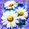 wooden frame flower number oil painiting for wall deccoration(40*40cm)